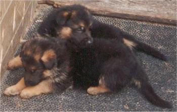 puppies-02